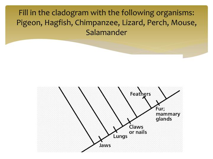 Fill in the cladogram with the following organisms:
