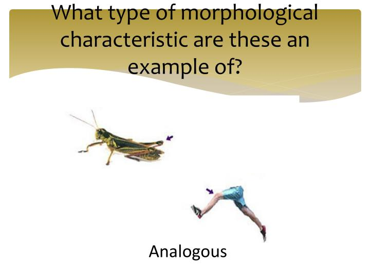 What type of morphological characteristic are these an example of?
