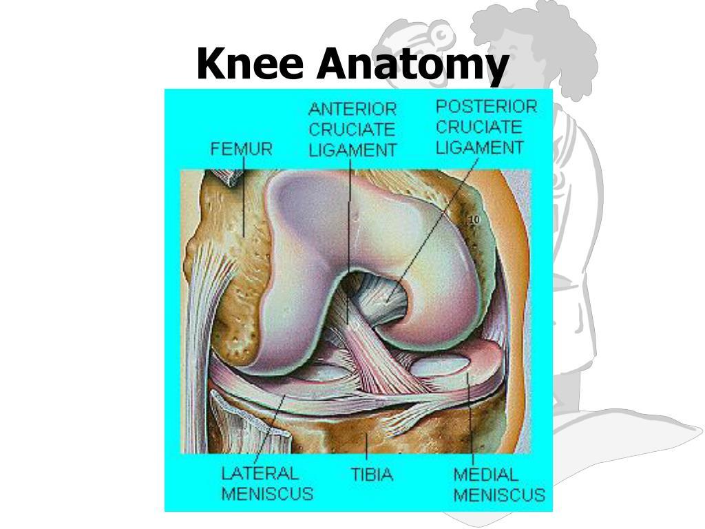Ppt Knee Anatomy Powerpoint Presentation Id5326433