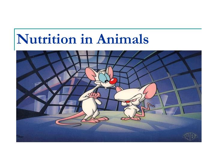 Ppt Nutrition In Animals Powerpoint Presentation Id 5327030