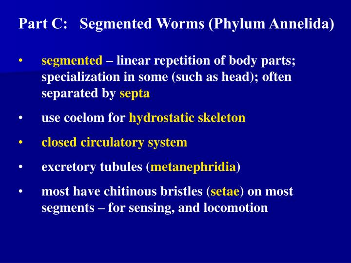 Part C:   Segmented Worms (Phylum Annelida)