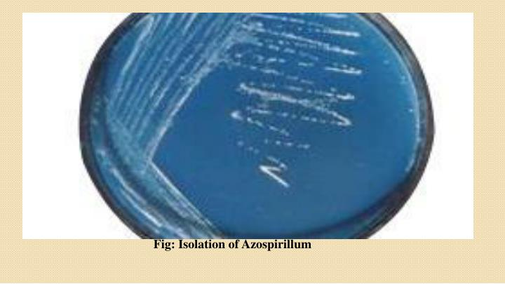 Fig: Isolation of