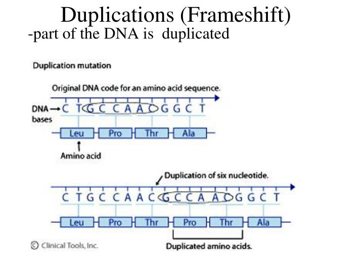 Duplications (Frameshift)