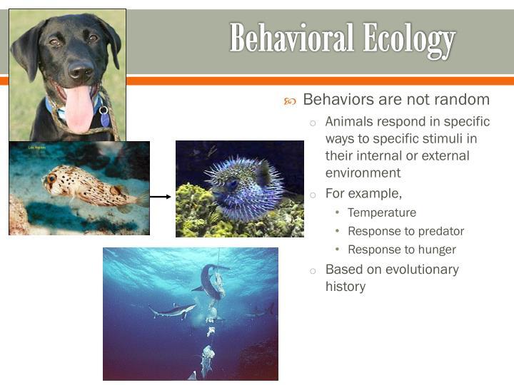 Behavioral ecology1