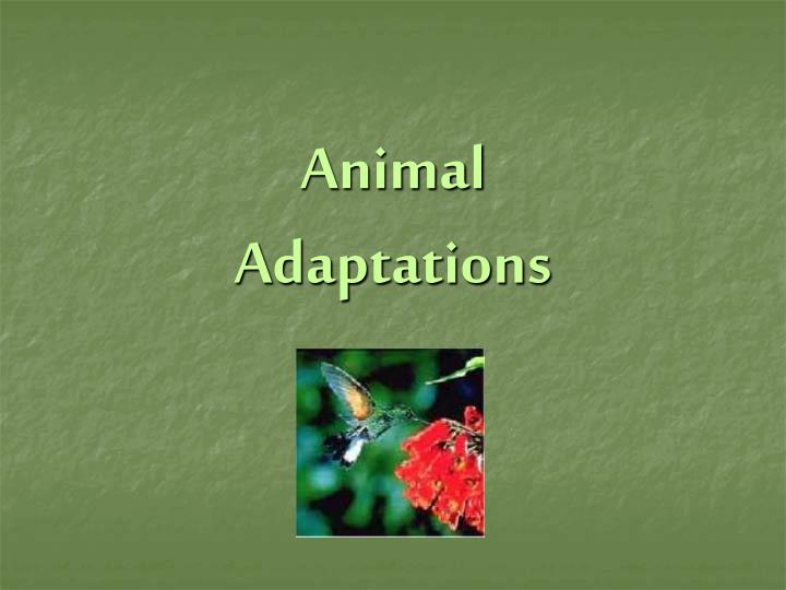 animal adaptations n.