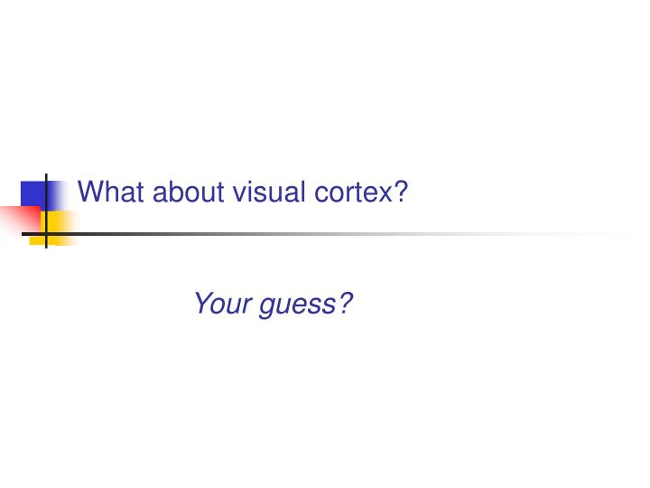 What about visual cortex?