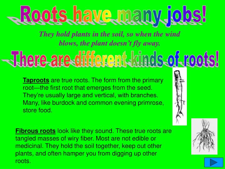 Roots have many jobs!