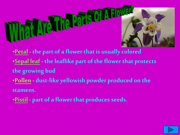 What Are The Parts Of A Flower?