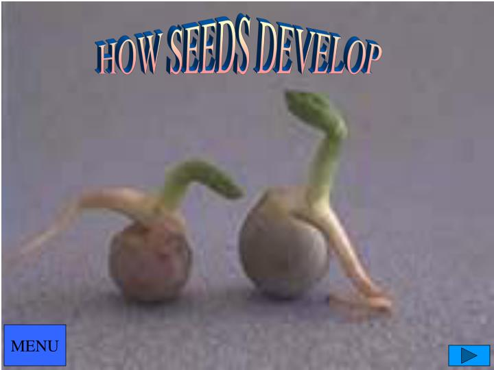 HOW SEEDS DEVELOP