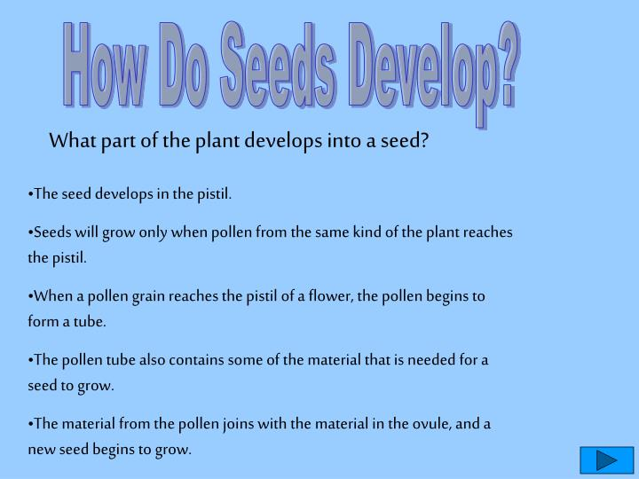 How Do Seeds Develop?