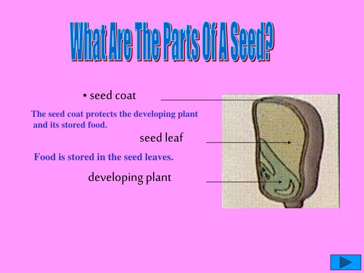 What Are The Parts Of A Seed?