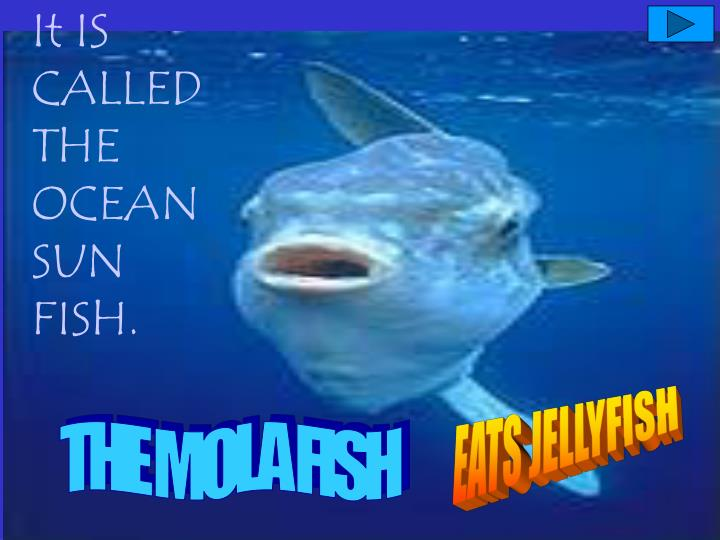 It IS CALLED THE OCEAN SUN FISH.
