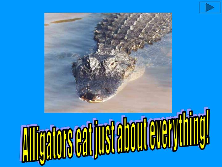 Alligators eat just about everything!