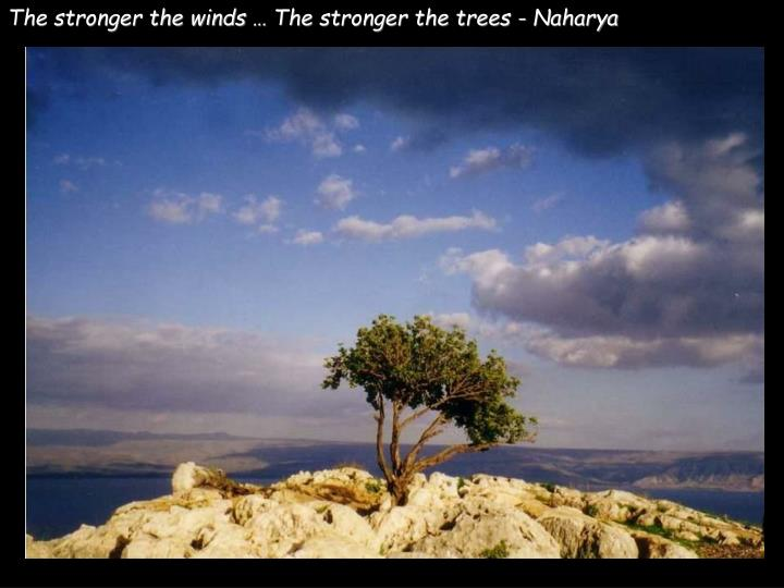 The stronger the winds … The stronger the trees - Naharya