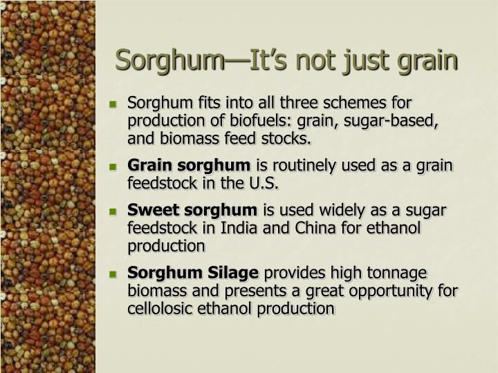 Sorghum—It's not just grain