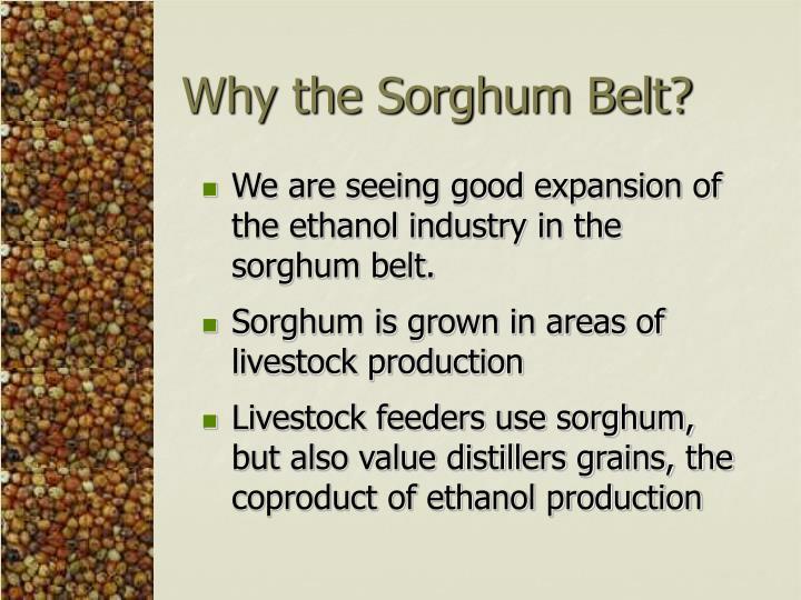 Why the Sorghum Belt?