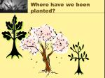 where have we been planted