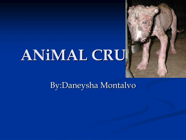 a group presentation on animal abuse Conclusion animal abuse is out there and is a crime committed in many ways there is passive and active abuse within passive abuse there is neglect, ignorance of the animal and improper care being given.