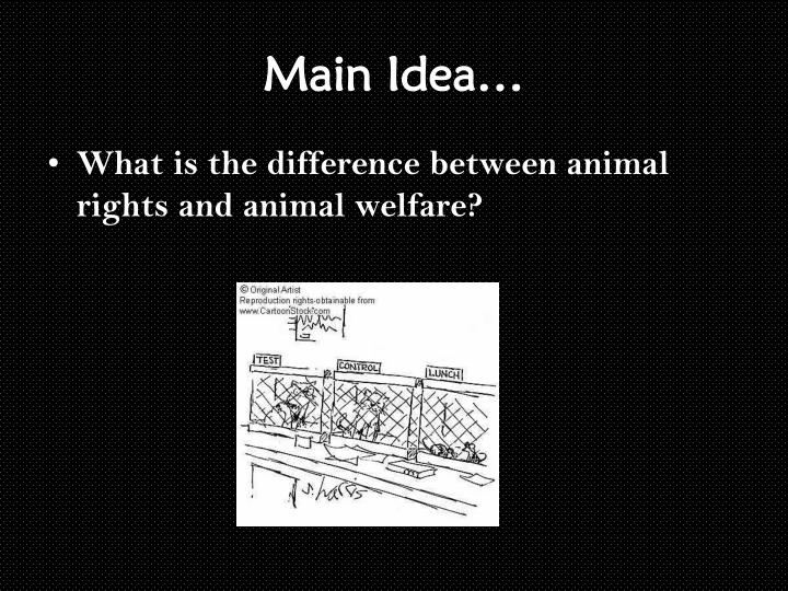 animal rights communitys plight for the welfare of animals Animal welfare is of great concern to the australian community and is a concern shared by the australian government pig welfare in state and territory legislation is guided by the model code of practice for the welfare of animals: pigs 3rd edition.