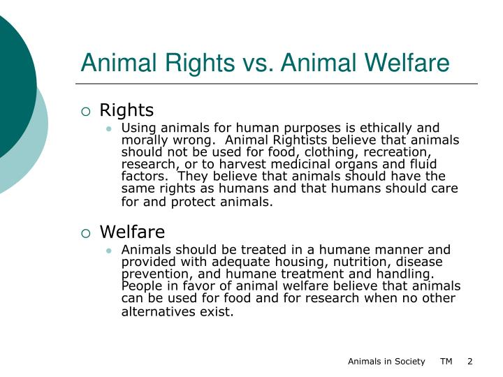 animal rights vs human rights essay Animal rights activists would prefer that no animal, including exotics like snakes, chimps, tigers, etc, be owned by a human when appropriate laws are already in place, why does the humane society of the united states (hsus) and other animal rights groups continue in pursuit of their radical agenda.