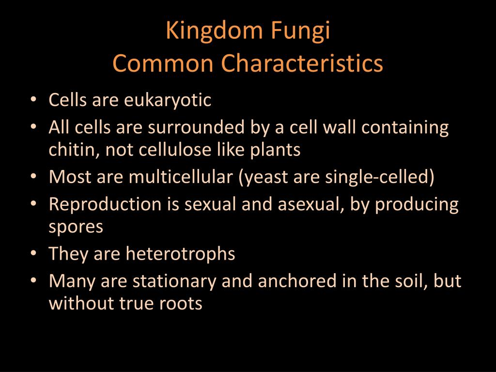 Characteristics common to all sac fungi that reproduce sexually
