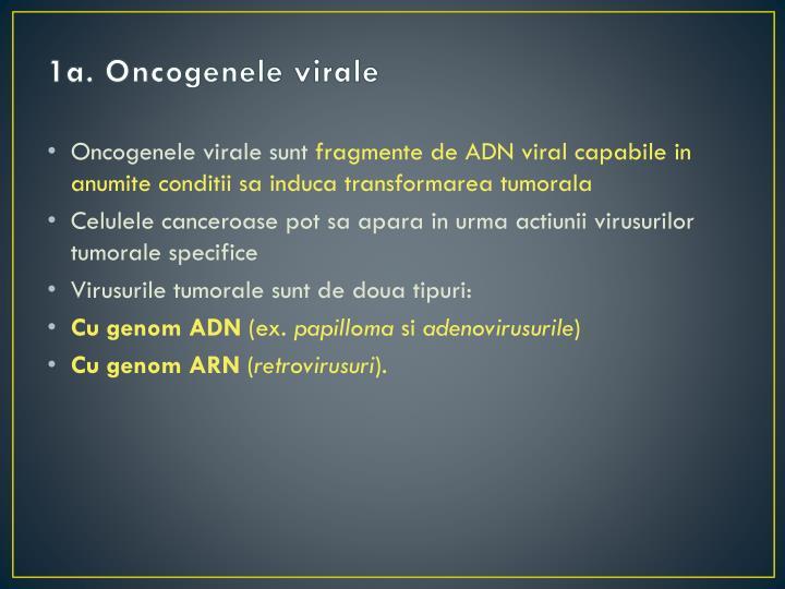 1a. Oncogenele virale