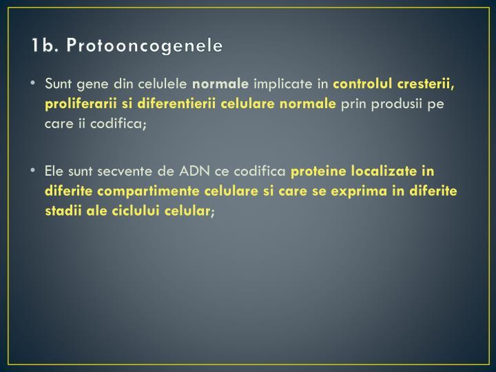 1b. Protooncogenele