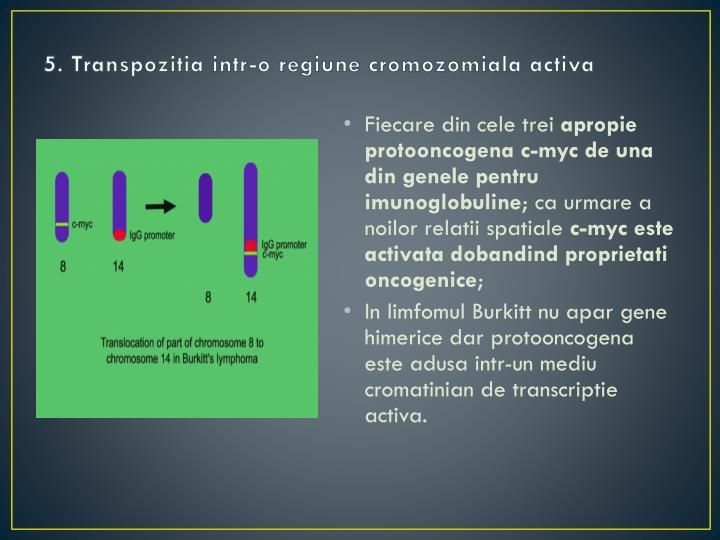 5. Transpozitia intr-o regiune cromozomiala activa
