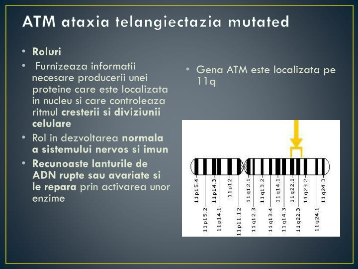 ATM ataxia telangiectazia mutated