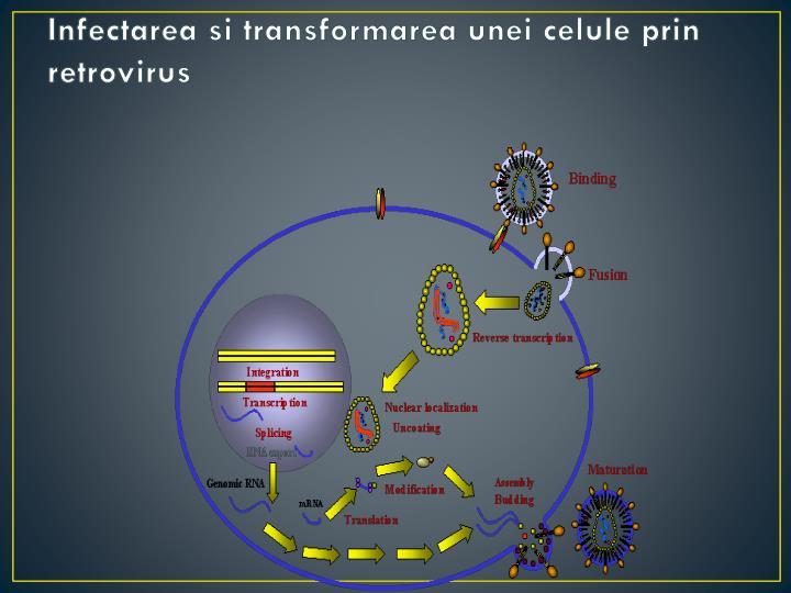 Infectarea si transformarea unei celule prin retrovirus