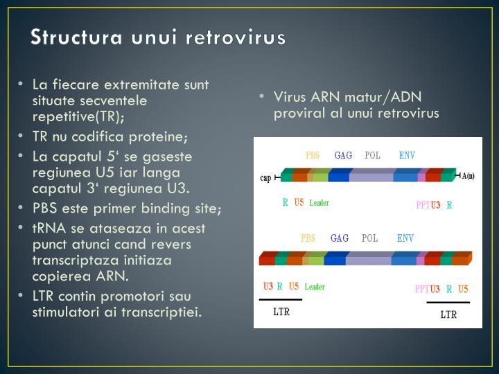 Structura unui retrovirus