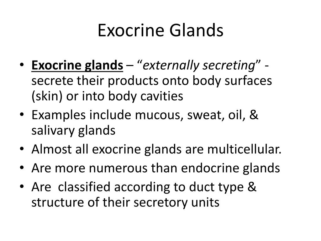 Ppt Exocrine Glands Powerpoint Presentation Id5341386