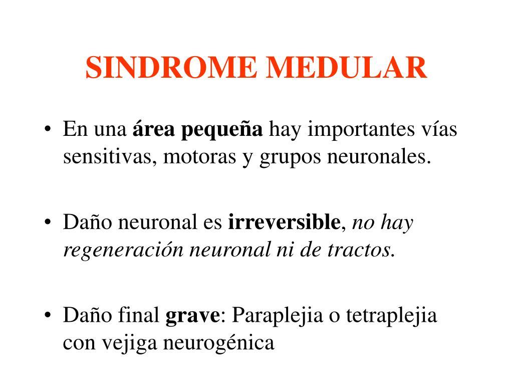 PPT - SINDROME MEDULAR PowerPoint Presentation - ID:5342536