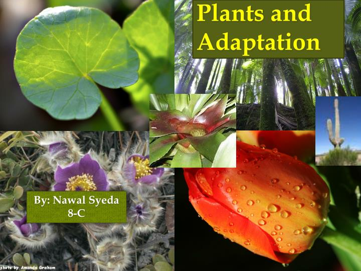 plants and adaptation n.