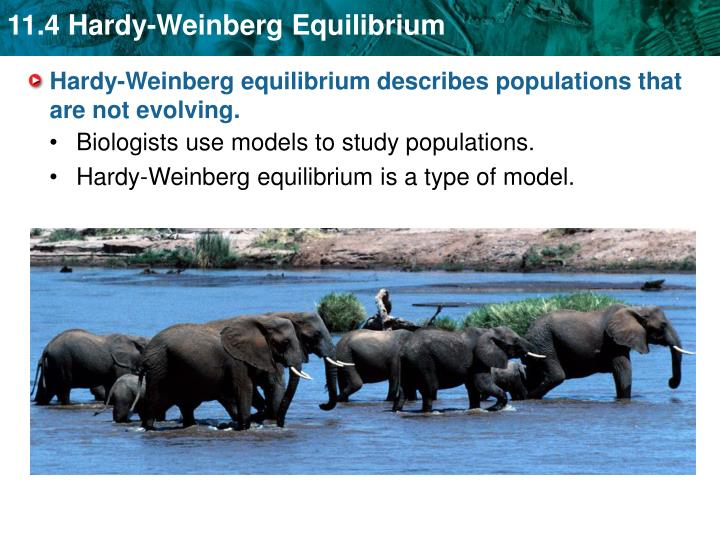 Hardy weinberg equilibrium describes populations that are not evolving