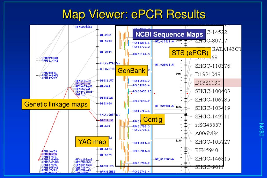 PPT - NCBI Human Genome Resources PowerPoint Presentation - ID:5346224