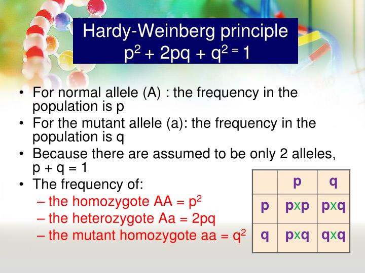 hardy weinberg essay Essay questions keyed to the ap biology labs  1988: laboratory #2 enzyme catalysis after an enzyme is mixed with its substrate, the amount of product  do the following with reference to the hardy-weinberg model a indicate the conditions under which allele frequencies (p and q) remain  constant from one generation to the next.