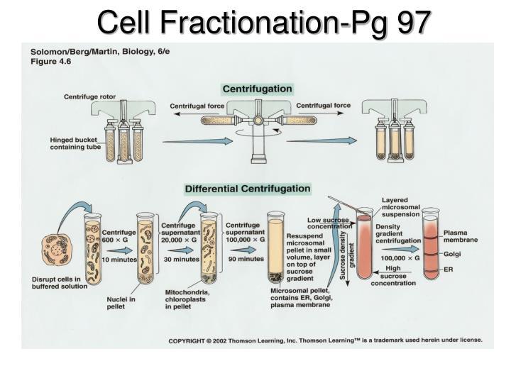 Cell Fractionation-Pg 97