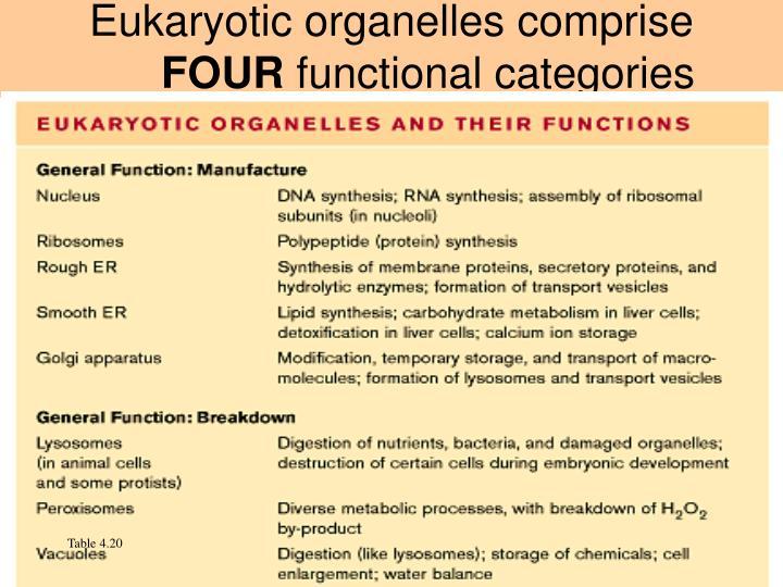 Eukaryotic organelles comprise