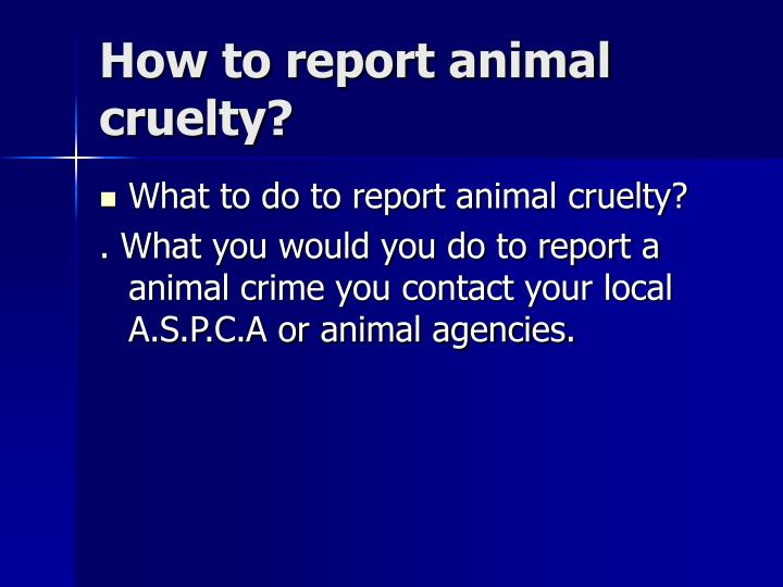How to report animal cruelty?