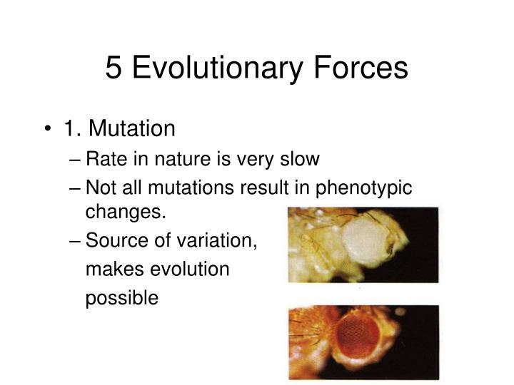 5 Evolutionary Forces