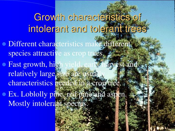 Growth characteristics of intolerant and tolerant trees