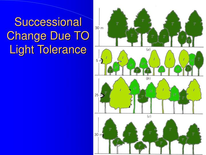 Successional Change Due TO Light Tolerance