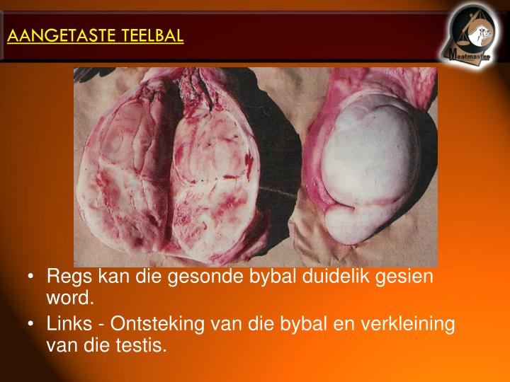 AANGETASTE TEELBAL
