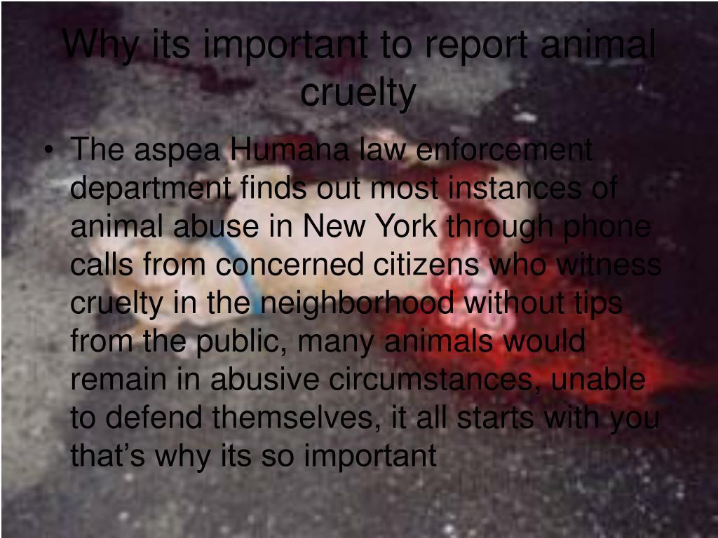 PPT - Animal Cruelty PowerPoint Presentation - ID:5349570