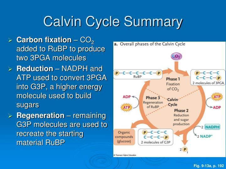 Calvin Cycle Summary