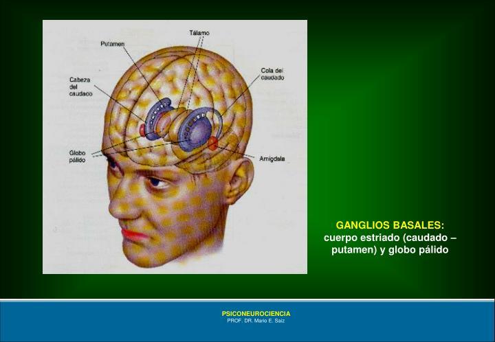 GANGLIOS BASALES: