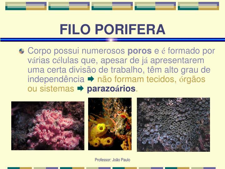 Filo porifera1