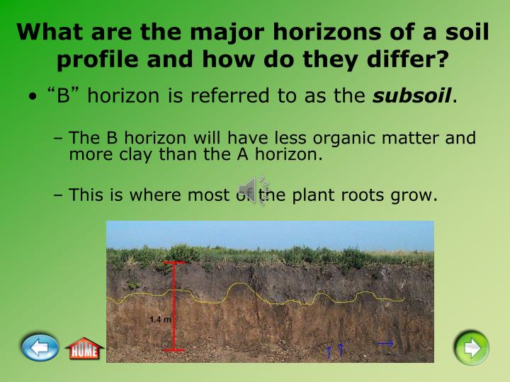 What are the major horizons of a soil profile and how do they differ?