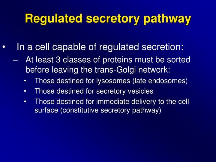 Regulated secretory pathway
